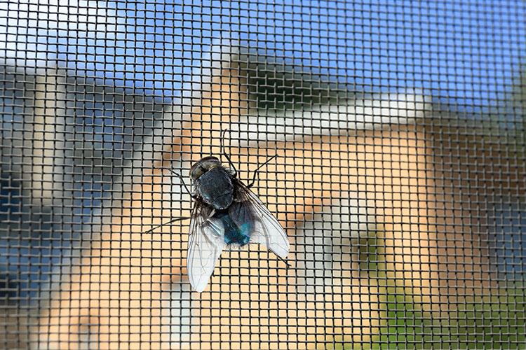 Fliege sitzt auf Fliegengitter des Dachfensters